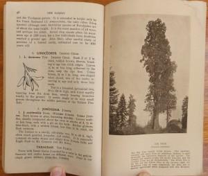 "Page 46-47 of ""A Yosemite Flora"""